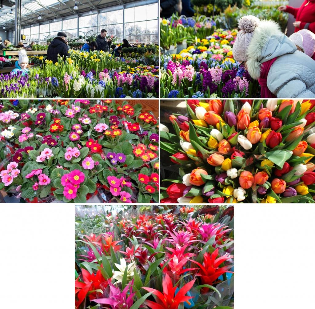 Купить цветы из сетки рабицы в гродно