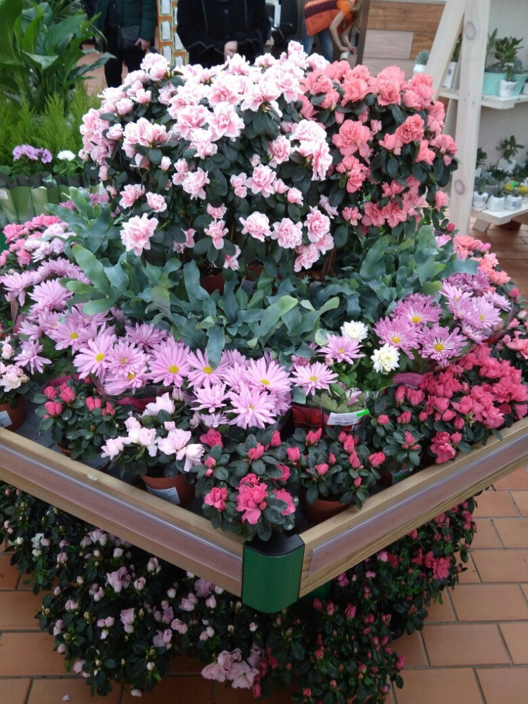 Купить цветы из сетки рабицы в гродно, магазин цветы ижевск адреса